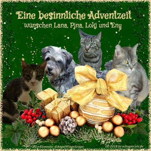 Advent-Eny_u_Cats.jpg
