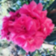 20190922_085550620_iOS.jpg