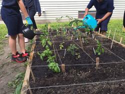 Garden mix for flourishing veggies