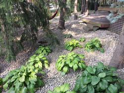 River rock enhances a hosta bed