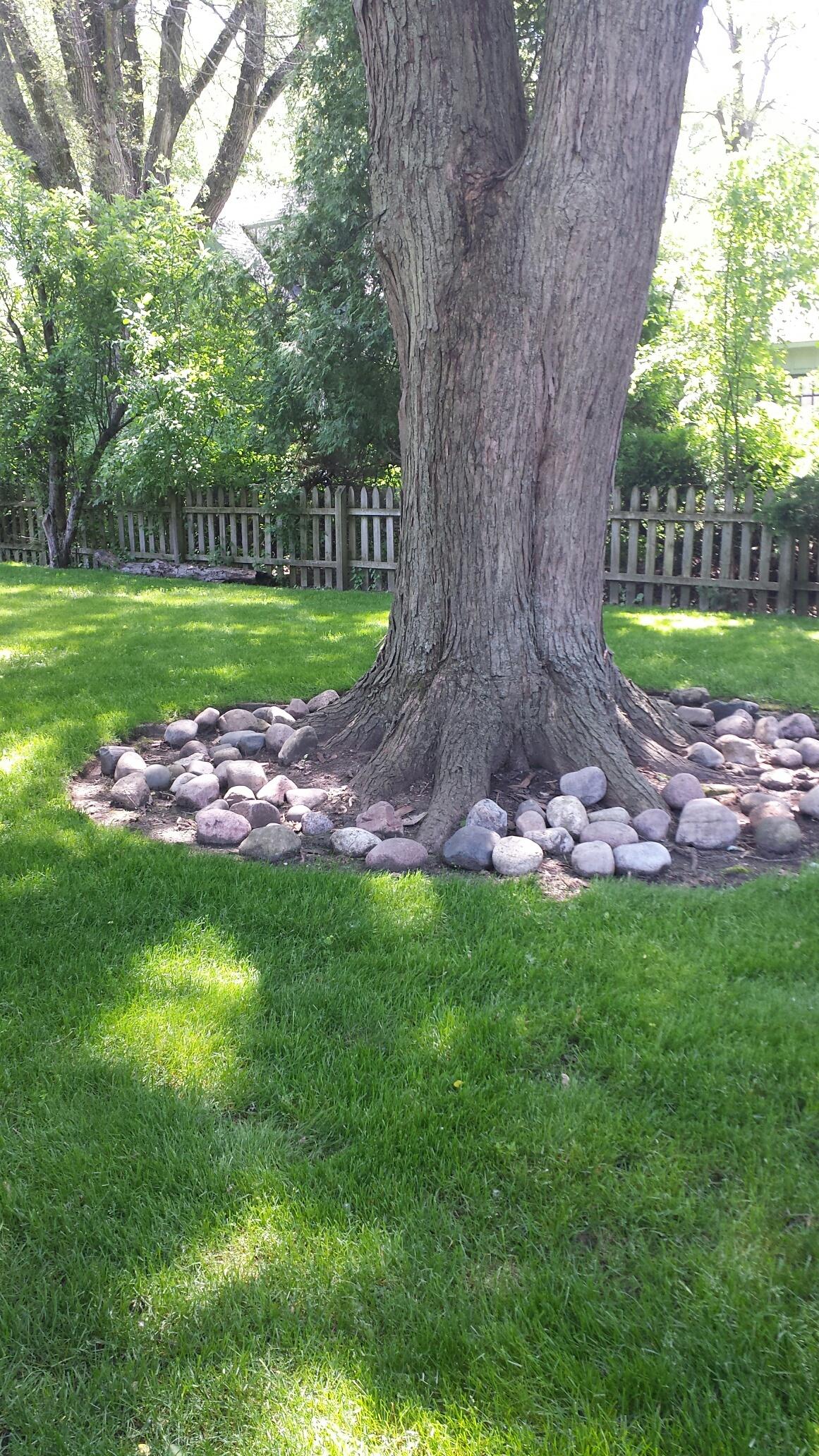 Joyce's Tree