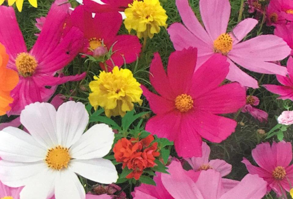 FK008 - Flower Seed  Fast Growing Wildflowers Mix