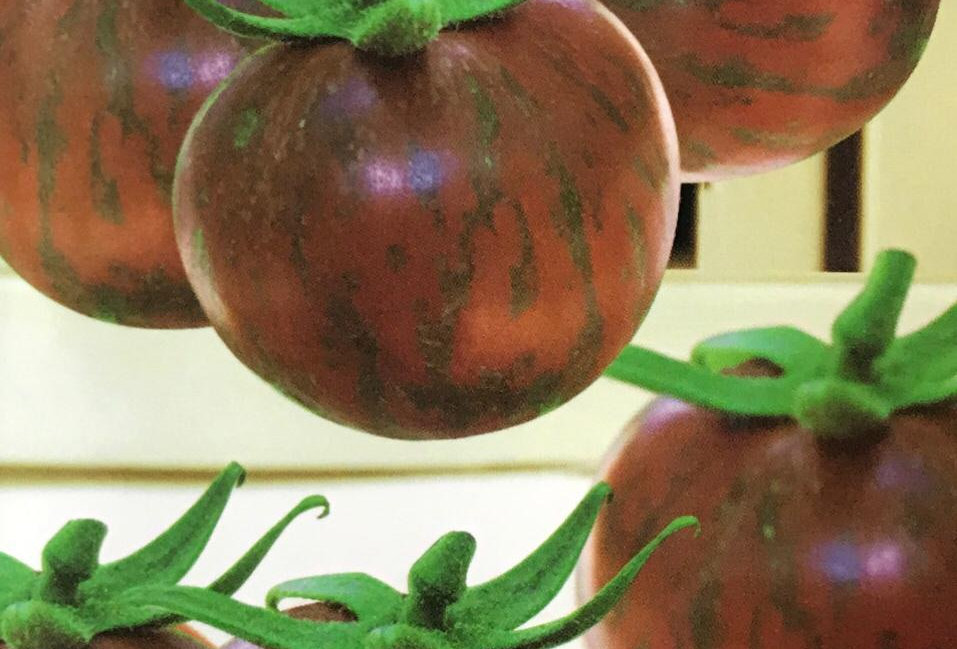 SC094- Vegetable Seed  Tomato