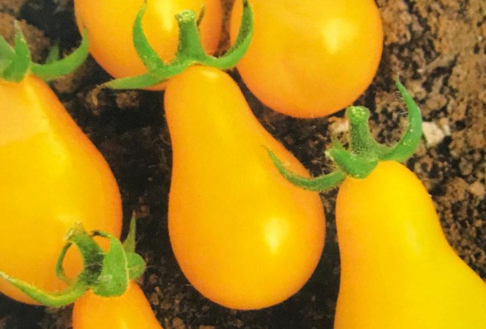SB038 - Vegetable Seed   Tomato