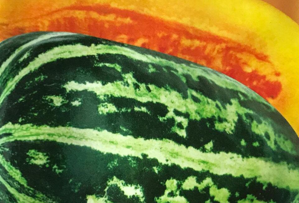 SB068 - Vegetable Seed  Muskmelon