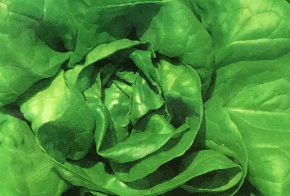 SC149- Vegetable Seed    Garden Lettuce