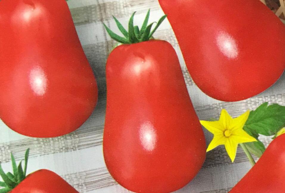 SC103- Vegetable Seed  Tomato