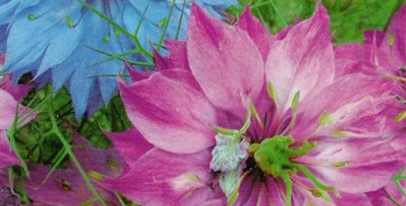 Flower seeds-SA151