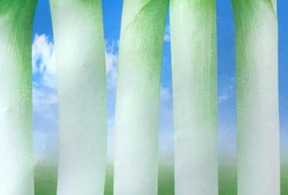 SC010 - Vegetable Seed    Leek