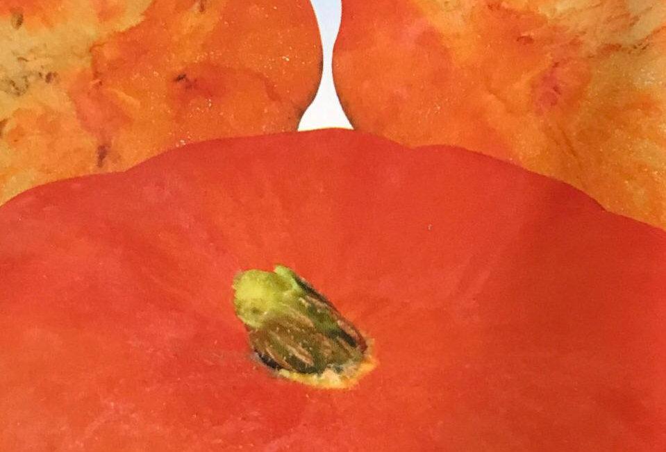 SB118- Vegetable Seed   Pumpkin