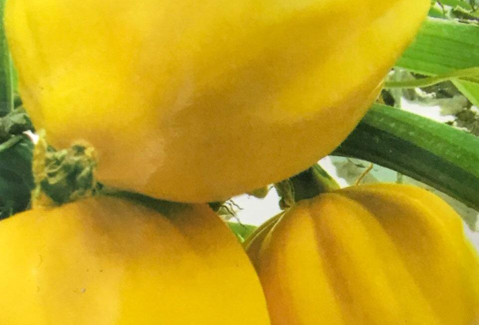 SB070 - Vegetable Seed  Pumpkin