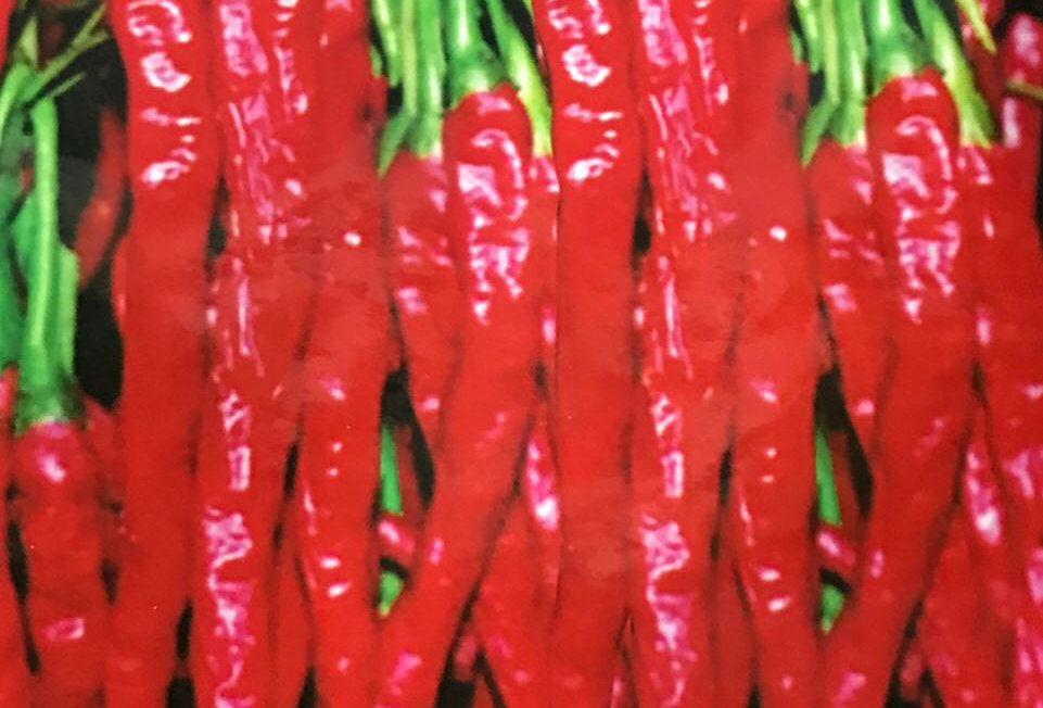 SC011 - Vegetable Seed    Red pepper