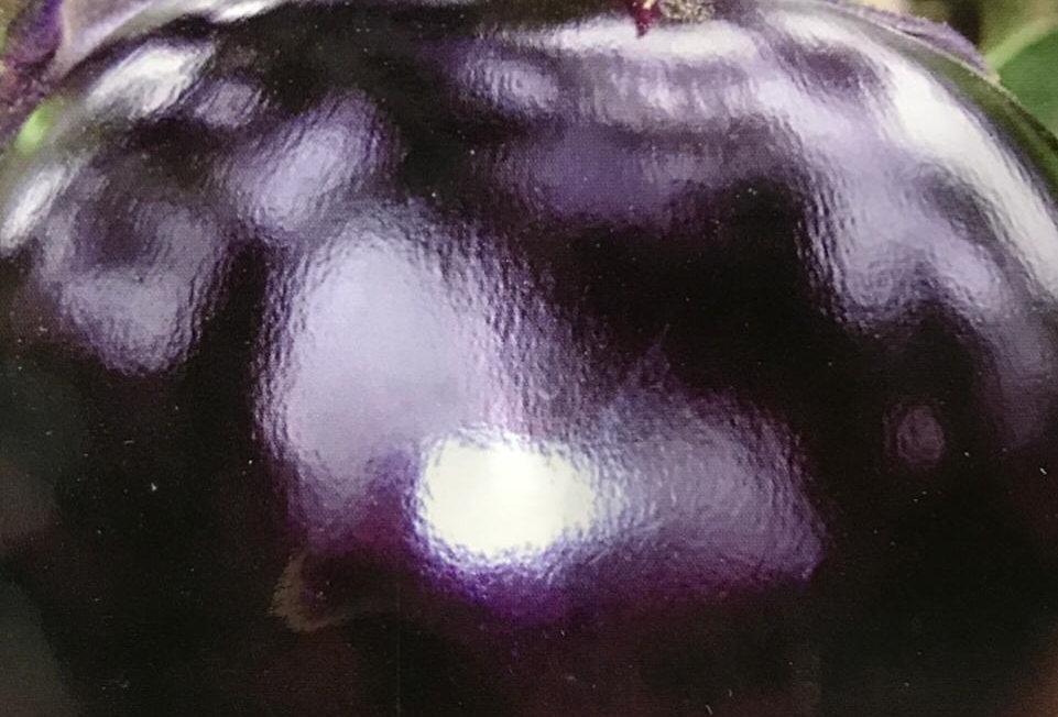 SC003 - Vegetable Seed      Eggplant
