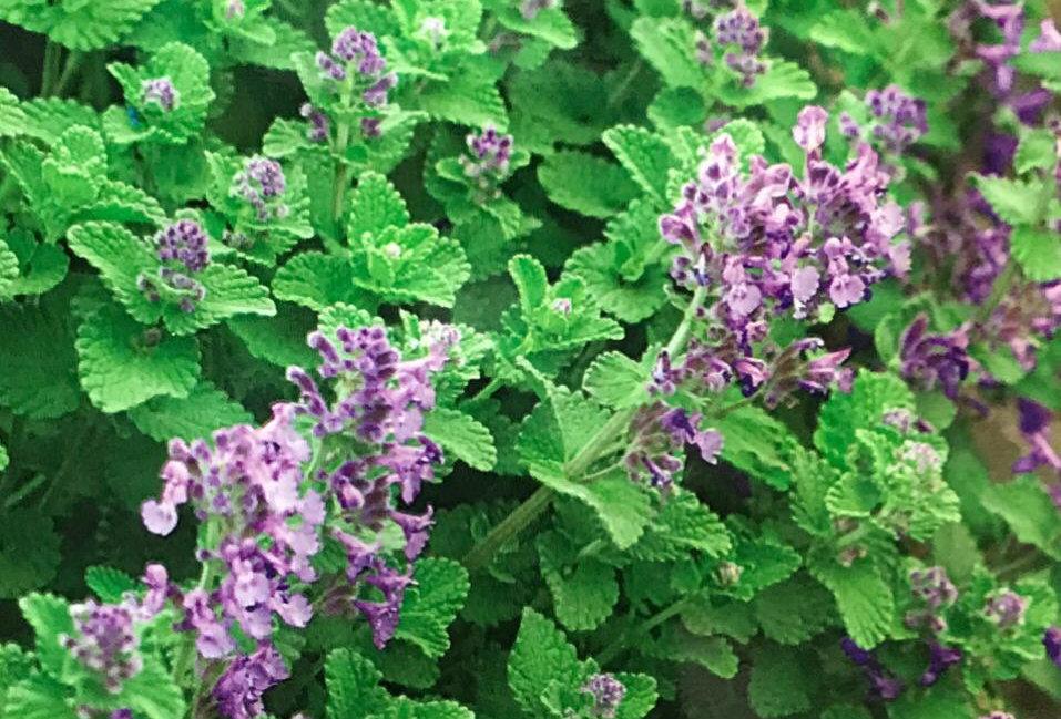 FD044 - Flower Seed  Balm