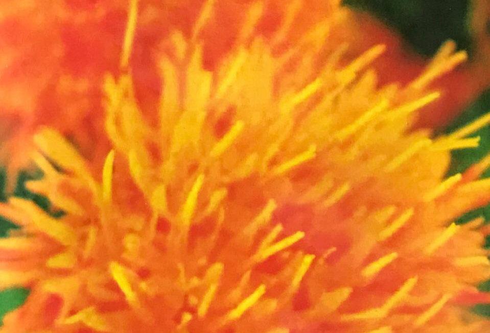 FA008 - Flower Seed  Safflower