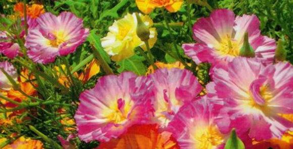 Flower seeds-SA271