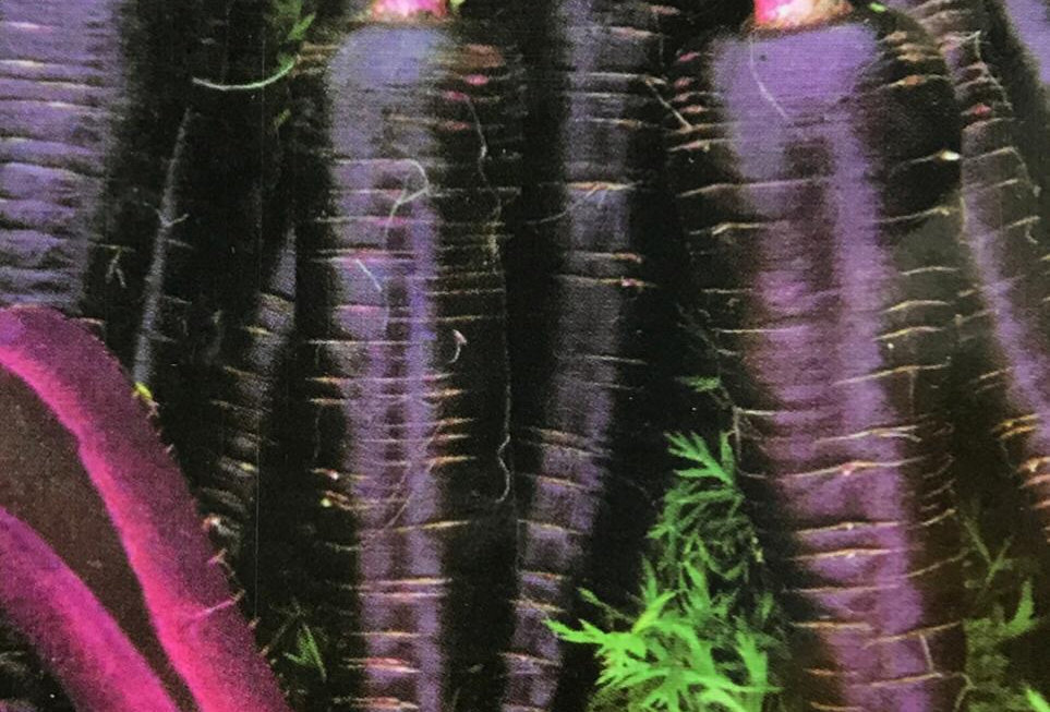 SC151- Vegetable Seed    Carrot