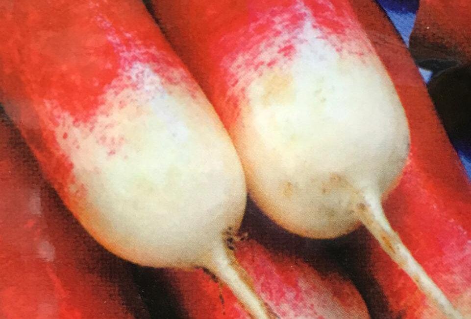 SC027 - Vegetable Seed   Radish
