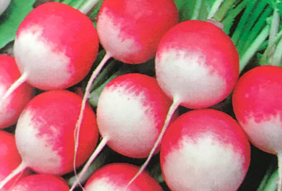 SC021 - Vegetable Seed   Garden Radish