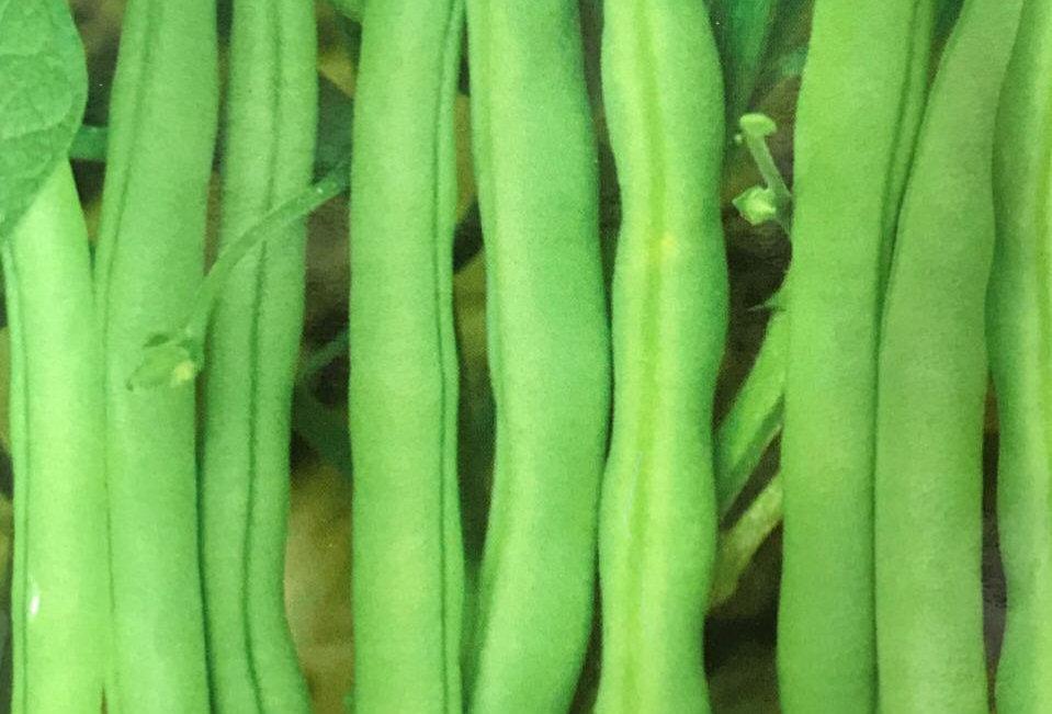 SC035 - Vegetable Seed   Bean