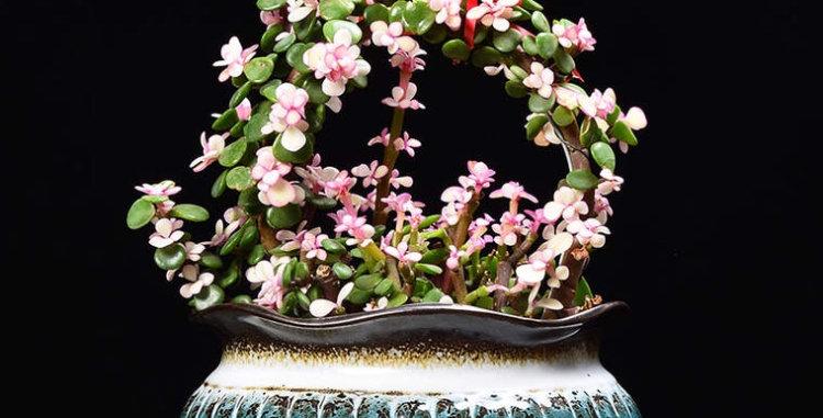 FP05-Flower Pot