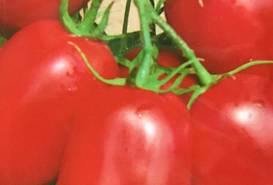 SC101- Vegetable Seed  Tomato