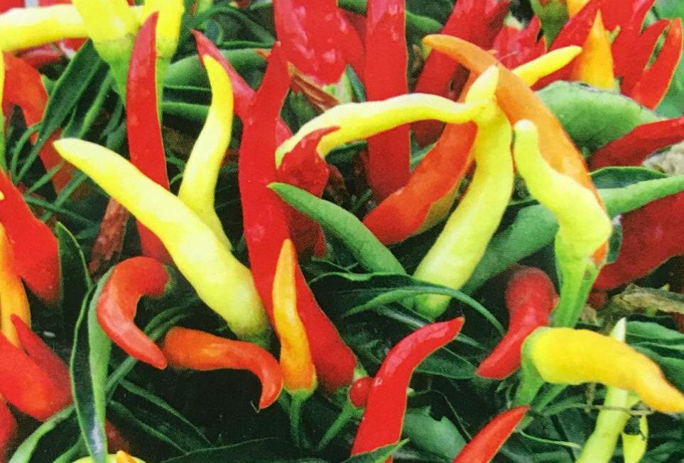 SB077 - Vegetable Seed  Ornamental Pepper