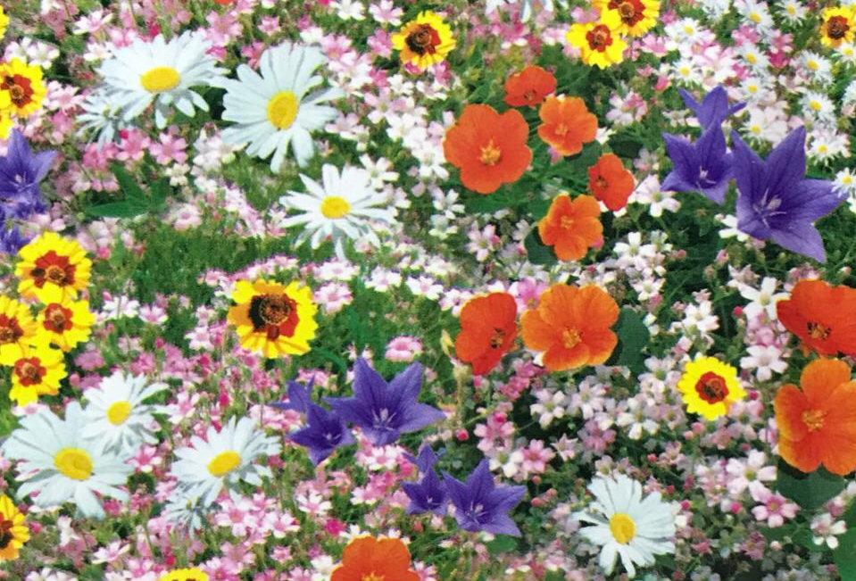 FK006 - Flower Seed  Waterlogging Tolerance Wildflowers Mix