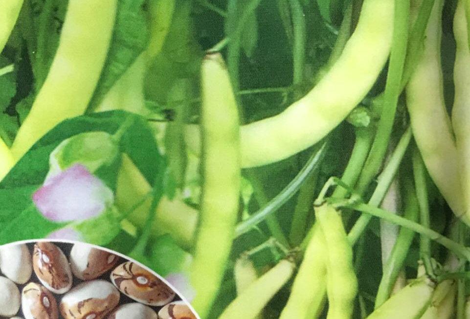 SC134- Vegetable Seed    Bean