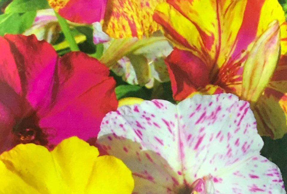 FA024 - Flower Seed   Jasmine