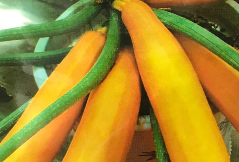 SB005 - Vegetable Seed      Pumpkin