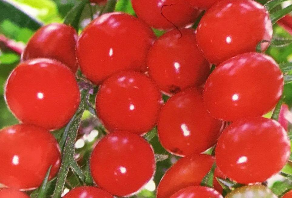 SB040 - Vegetable Seed   Tomato
