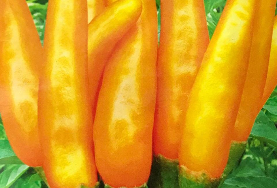 SB015 - Vegetable Seed   Wild Capsicum