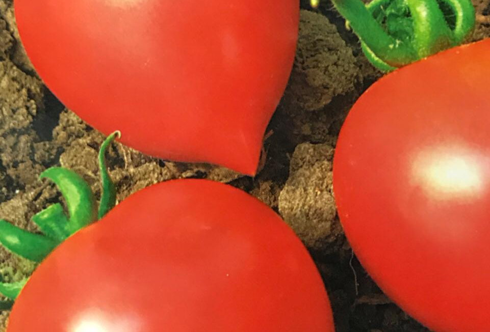 SC053 - Vegetable Seed  Tomato