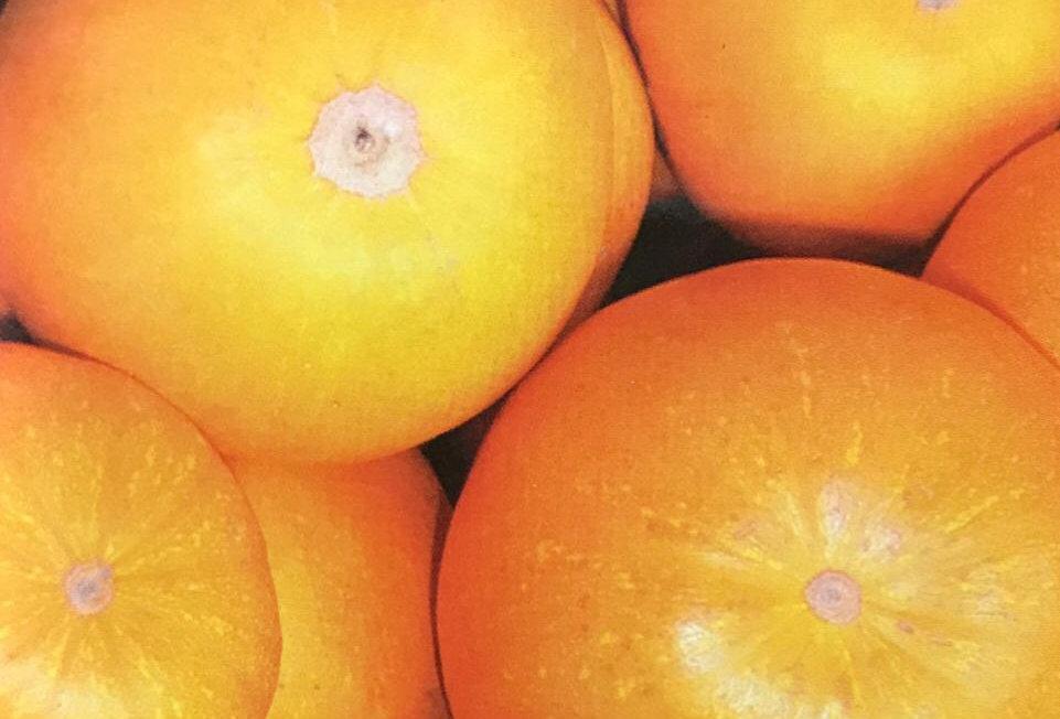 SB030 - Vegetable Seed   Pumpkin