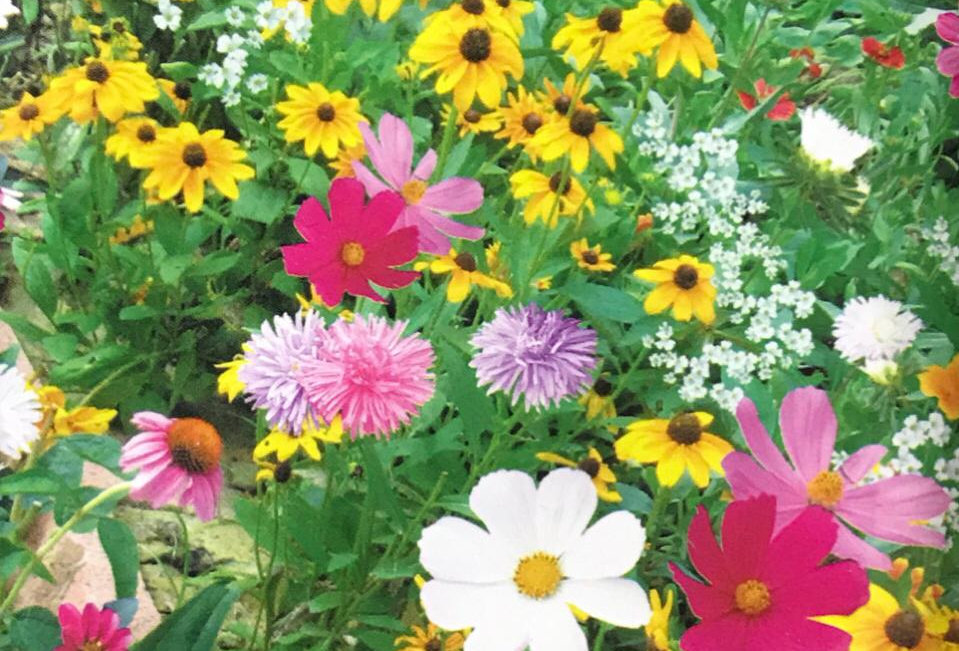 FK007 - Flower Seed  Drought Tolerance Wildflowers Mix