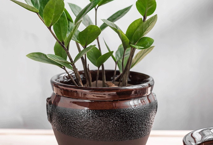FP22-Flower Pot