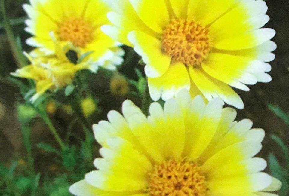 FA050 - Flower Seed  Egg Flower