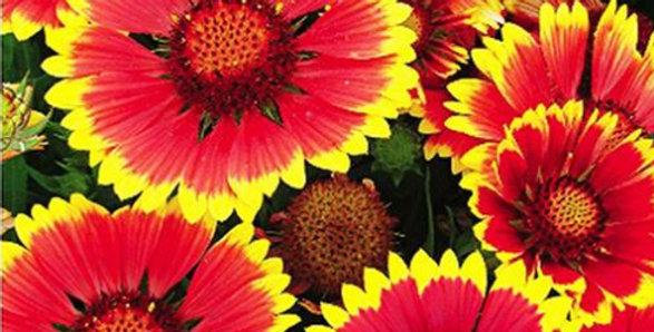 Flower seeds-SA075