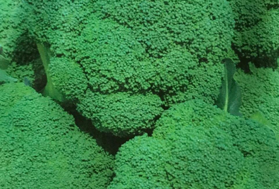 SC007 - Vegetable Seed     Broccoli