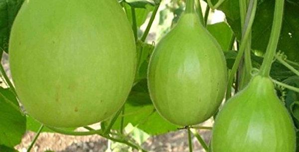 SB074 - Vegetable Seed  Bottle Gourd
