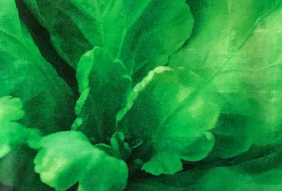 SC014 - Vegetable Seed    Crowndaisy Oxeyedaisy