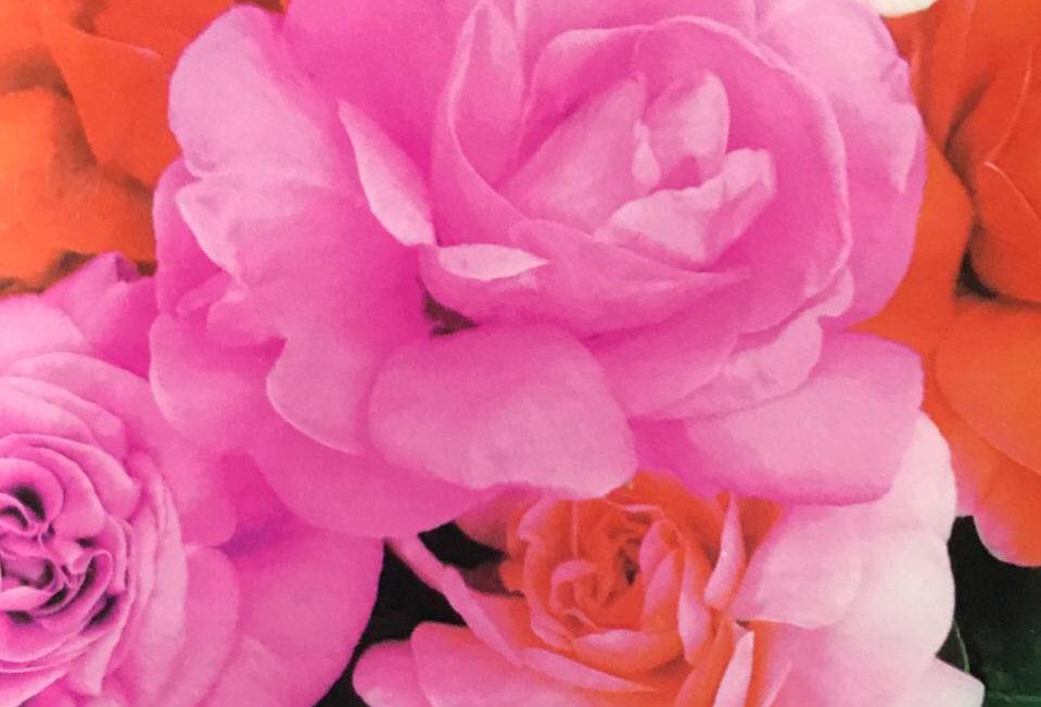 FA011 - Flower Seed  Garden Balsam