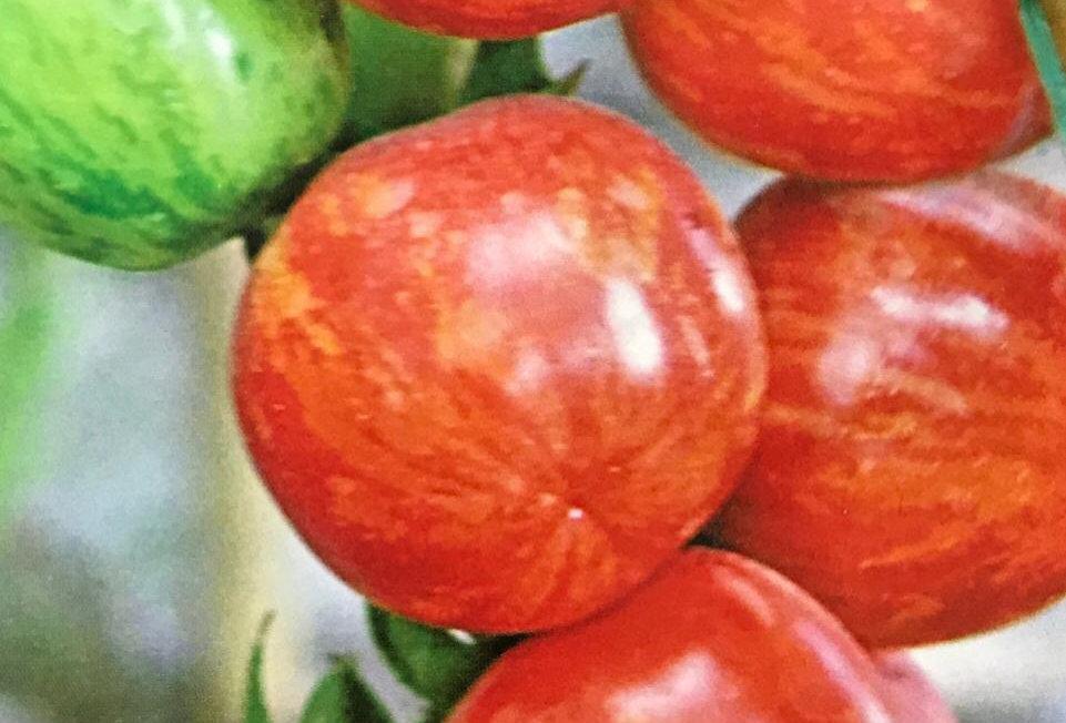 SB020 - Vegetable Seed   Tomato