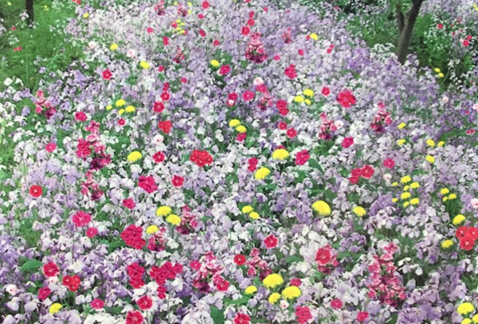 FK005 - Flower Seed   Shade-tolerance Wildflowers Mix