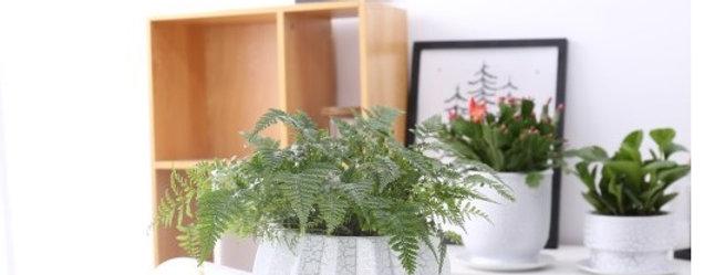 FP21-Flower Pot