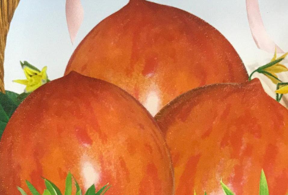 SC102- Vegetable Seed  Tomato