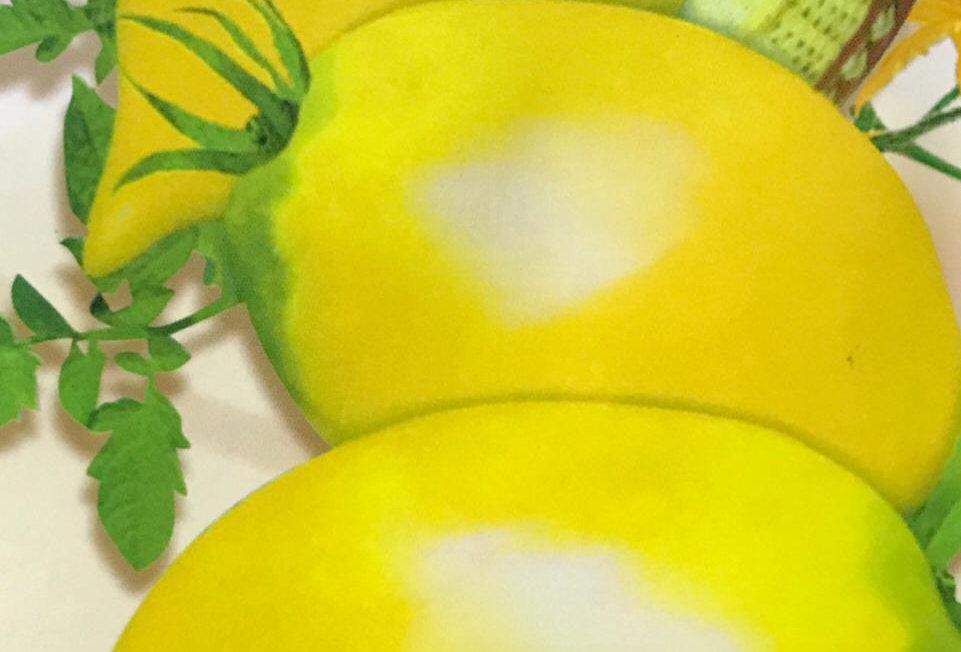 SC054 - Vegetable Seed  Tomato