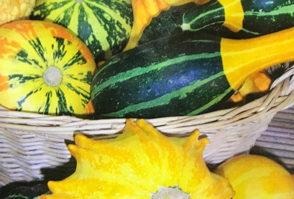 SB012 - Vegetable Seed    Doll Pumpkin