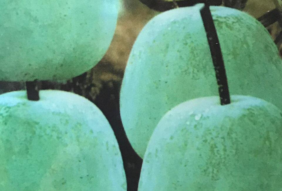 SC001 - Vegetable Seed        Waxgourd